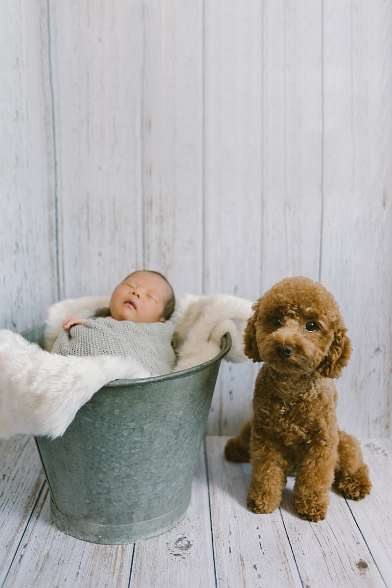 petitestory newborn photography newborn with pets photography newborn with puppy photography新生児写真